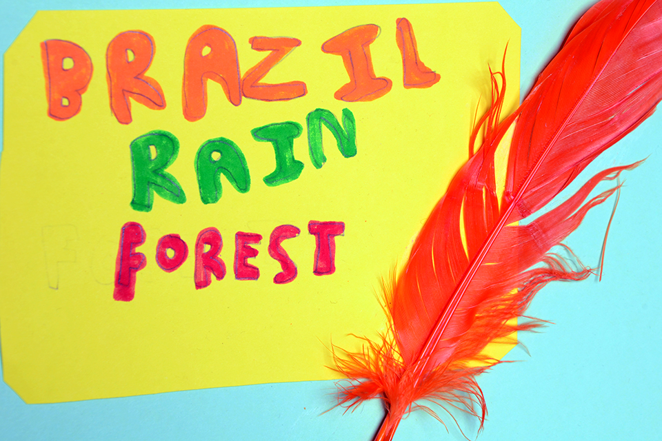 BrazilianRainForests-2