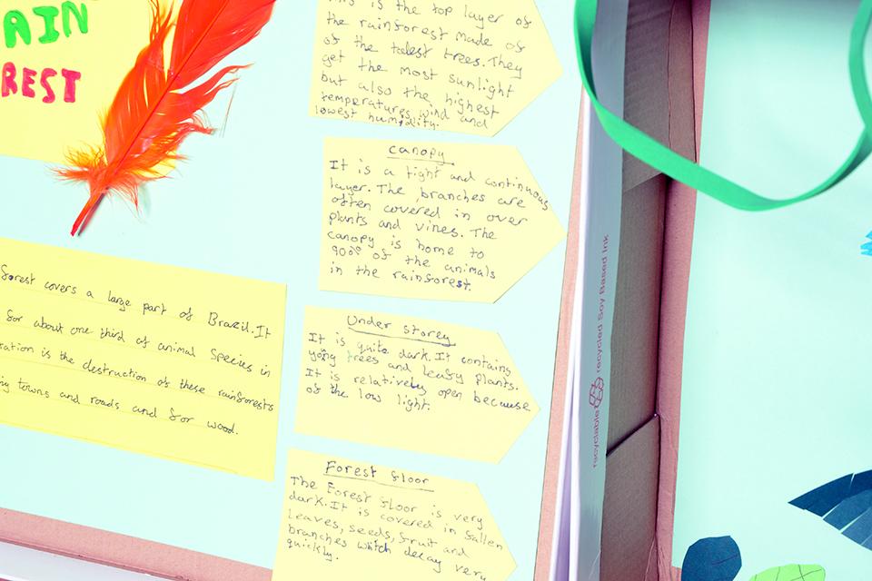 How to Make a Brazilian Rainforest Diorama - Classroom Ideas