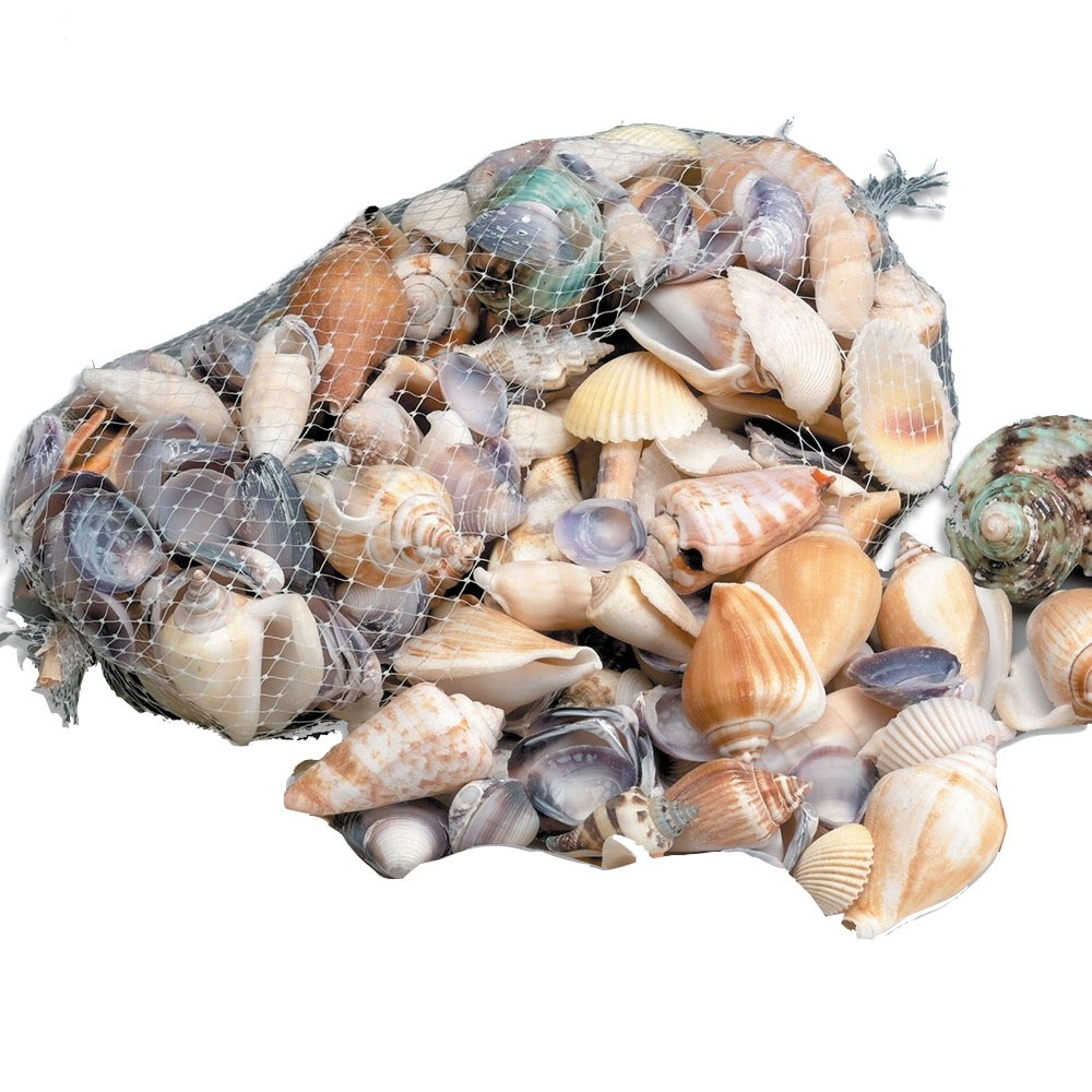 Under the Sea Shells