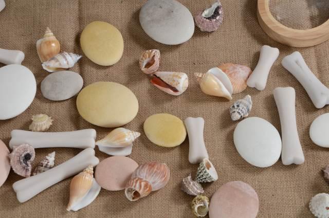 Dinosaur bones, pebbles and shells