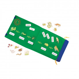 Foldout Food Chain