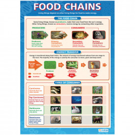 Food Chains/Food Cycle Poster Set