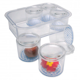 Bug Pot Set with Magnifying Lids